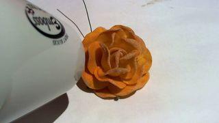 Starburst sprayed flower 10